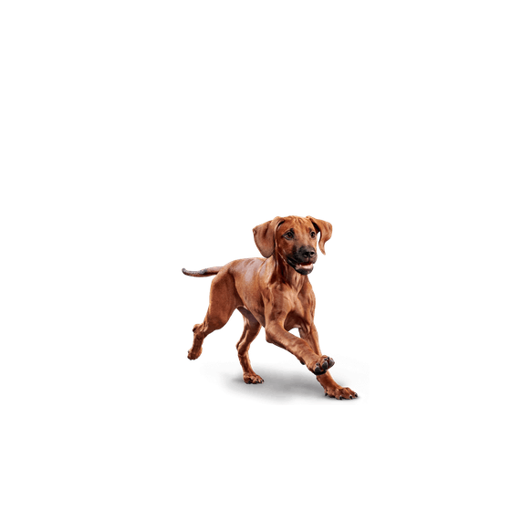 DIAMOND Naturals SMALL BREED CHICKEN & RICE 8.16 Kg.