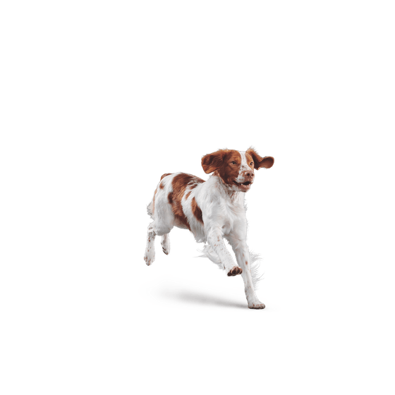 Case para Iphone Escandalosos