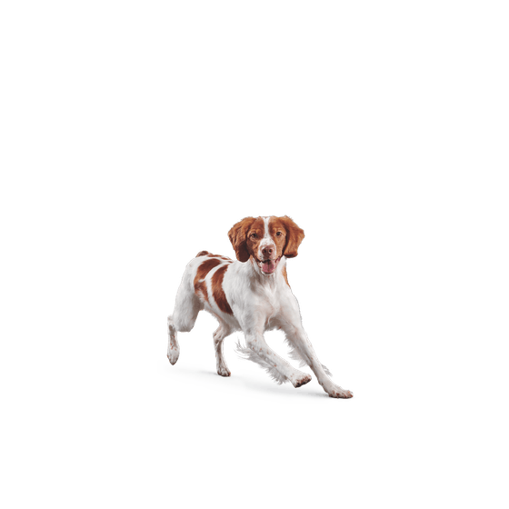 Case Squishy Gato Samsung Galaxy A5 2017