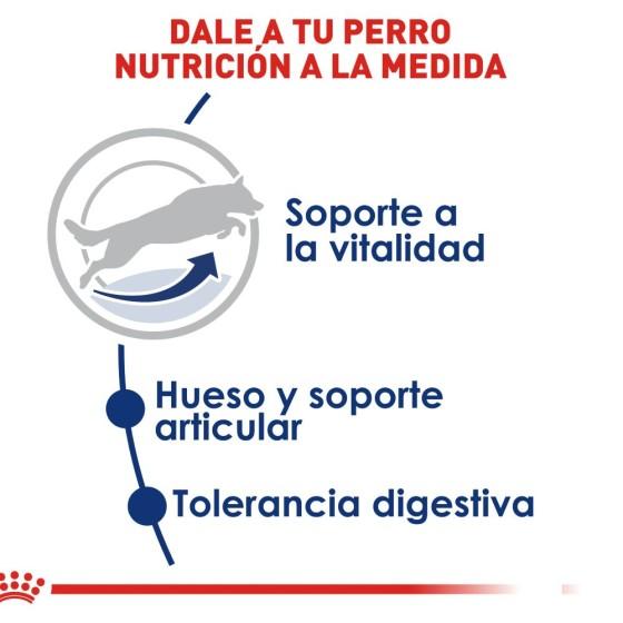 Kigurumi / Pijama Diana Cat (Envío gratis)